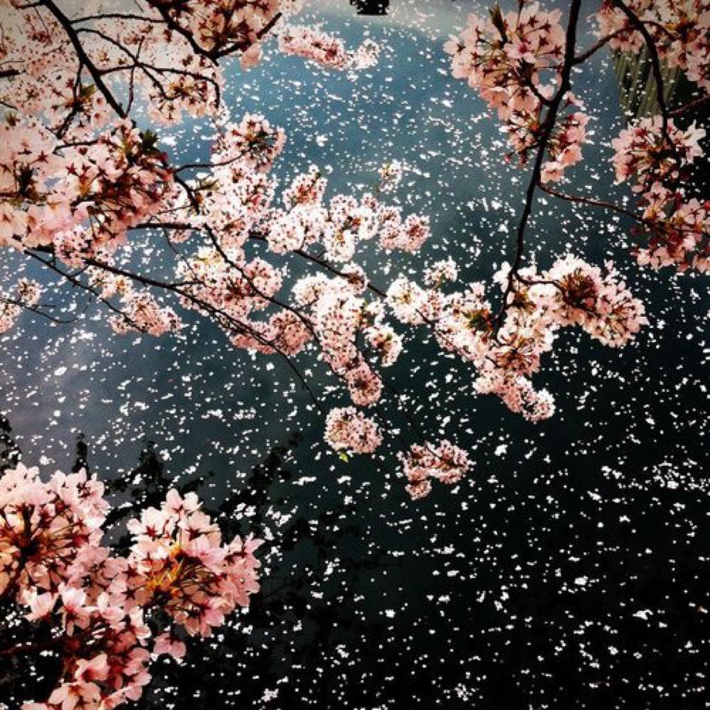 少女心|春天味道的韩语歌