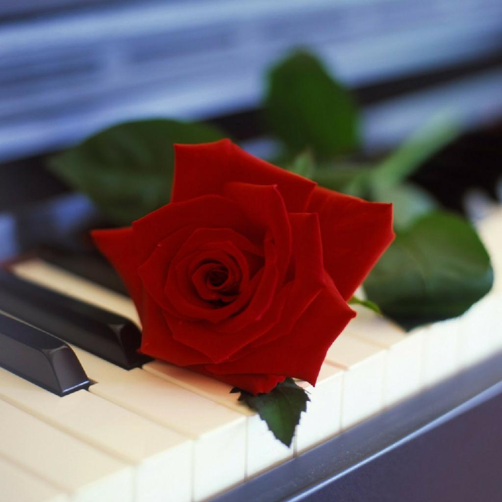 东方碎月钢琴简谱