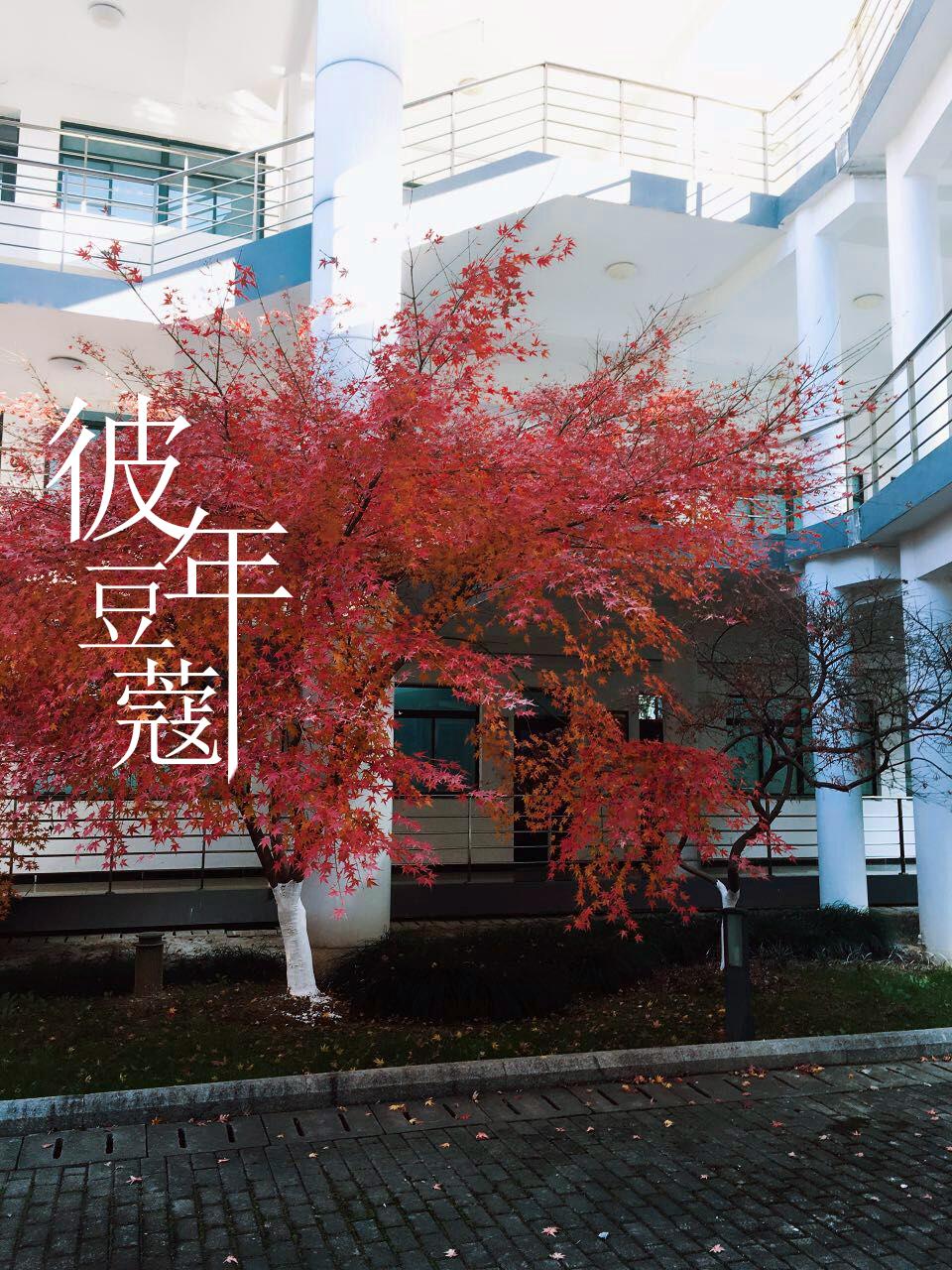 原谅(cover:刘瑞琦)