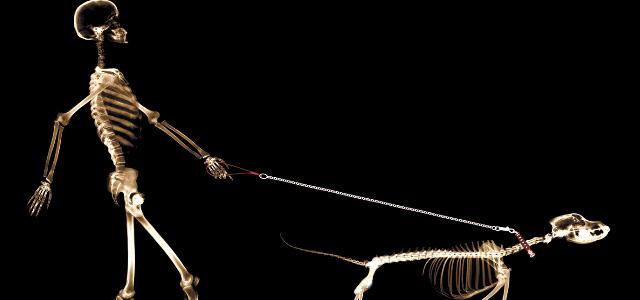 x ray dog ravenous_X-Ray Dog - 歌手 - 网易云音乐